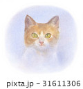 鼻の白い茶トラ 31611306