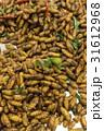 バグ 昆虫 虫の写真 31612968