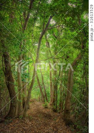 森の中のハイキングコース 31613529