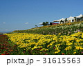 ユリ 百合 花の写真 31615563