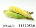 トウモロコシ3 31619530