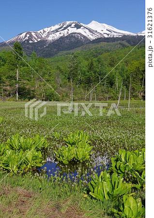 信州の高原 乗鞍高原のどじょう池より乗鞍岳を望む 水芭蕉やミツガシワが咲く6月の風景 31621376