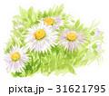 daisyfleabane17616pix7 31621795
