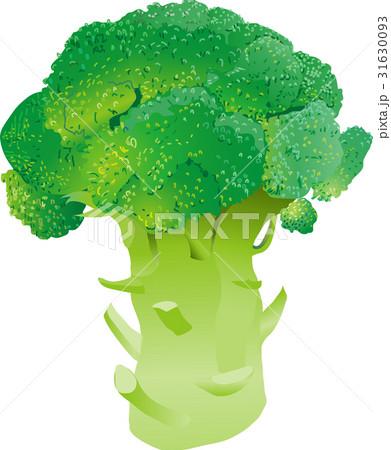 鮮やかなブロッコリー 31630093