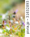 土筆 つくし 春の写真 31632893