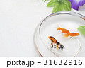 金魚と朝顔 31632916