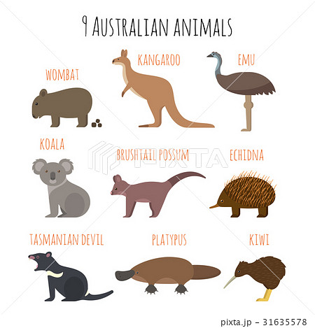 Vector set of Australian animals icons. 31635578