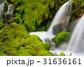 チャツボミゴケ公園 31636161
