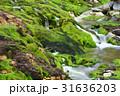 チャツボミゴケ公園 31636203