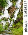 チャツボミゴケ公園 31636227
