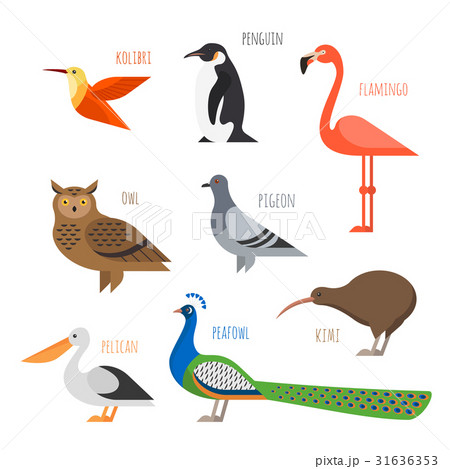 Vector set of Colorful bird icons. 31636353