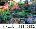 秋色に囲まれた水辺エリア 31640882