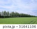 斜里の麦畑 31641106