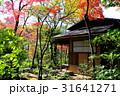 茶室とその周辺の紅葉 31641271