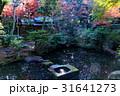 秋の紅葉庭園 31641273