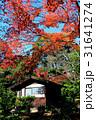 茶室とその周辺の紅葉 31641274