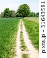 麦畑の横に続く一本の細道と遠くに見える大木 31643581