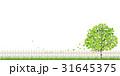 新緑(若葉) 31645375