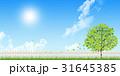 新緑(若葉) 31645385