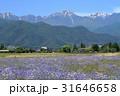 風景 自然 安曇野の写真 31646658