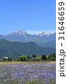 風景 自然 安曇野の写真 31646659