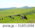 北海道十勝の酪農 31651098