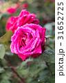 神代植物公園_薔薇 31652725