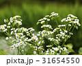 夏の野の花 31654550
