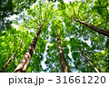 木 樹木 新緑の写真 31661220