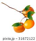 柿 秋の味覚 果物のイラスト 31672122