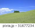 草原 丘 晴れの写真 31677234