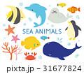 海の生き物イラスト 31677824