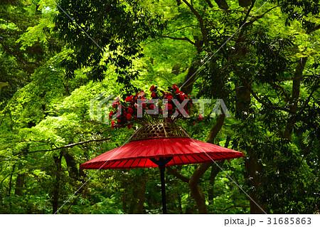 京都 葵祭  31685863