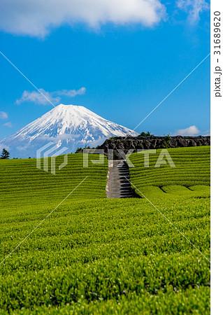 【静岡県】富士山と茶畑 31689620