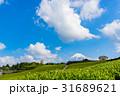 静岡県 茶畑 畑の写真 31689621