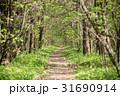 森林 林 森の写真 31690914