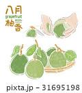 中秋節,柚子,八月,插畫 31695198