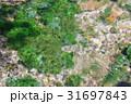 湧き水 清水 本宮の写真 31697843