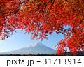 富士山 山 青空の写真 31713914