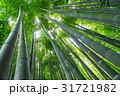 鎌倉 報国寺 竹林の写真 31721982