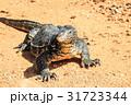 とかげ トカゲ 蜥蜴の写真 31723344