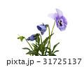 花 ブルー お花の写真 31725137