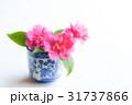 椿 花 蕎麦猪口の写真 31737866