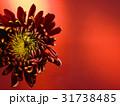 お花 フラワー 咲く花の写真 31738485
