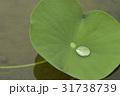 自然 葉 グリーンの写真 31738739