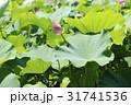 お花 フラワー 咲く花の写真 31741536