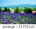 北海道富良野の大自然に広がるラベンダー畑01 31752141