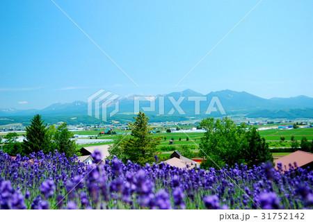 北海道富良野の大自然に広がるラベンダー畑02 31752142