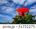 夏の青空とハイビスカス 和歌山・串本にて 31752275