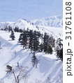 雪山と並ぶ木々の長い影 31761108